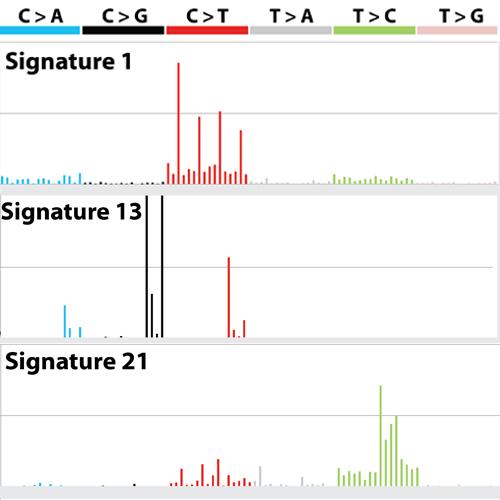 Mutational signatures picture